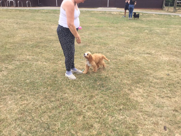 Dog training classes Huntingdon