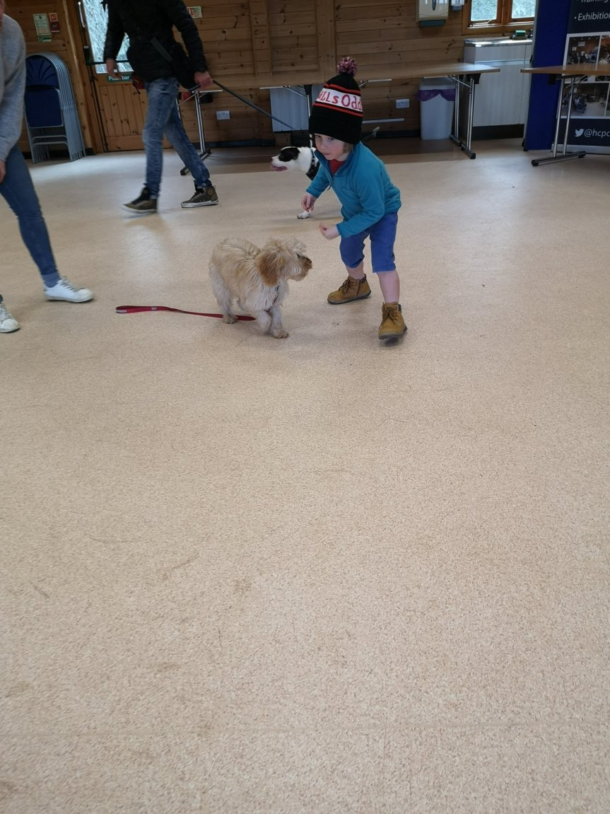 Puppy training classes Cambridgeshire