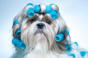 Marketing Ideas for Pet Groomers