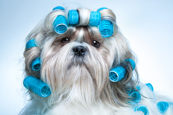 dog-groomers
