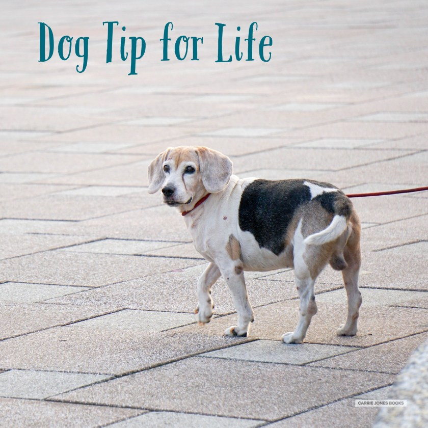 Dog Tip for Life