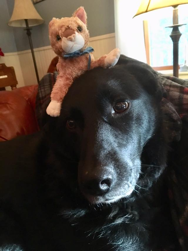 Sparty's Dog Thoughts