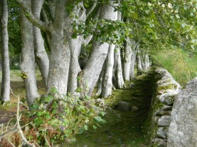 stone fence & tree row. Image by C. L. Tangenberg