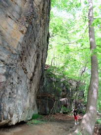 IMG_1585_leaning-cliff-JV-tree