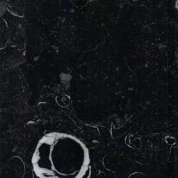 Finition Kilkenny Limestone Fossil