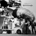 Antonio Paradiso, Toro e mucca meccanica, La Biennale di Venezia 1978