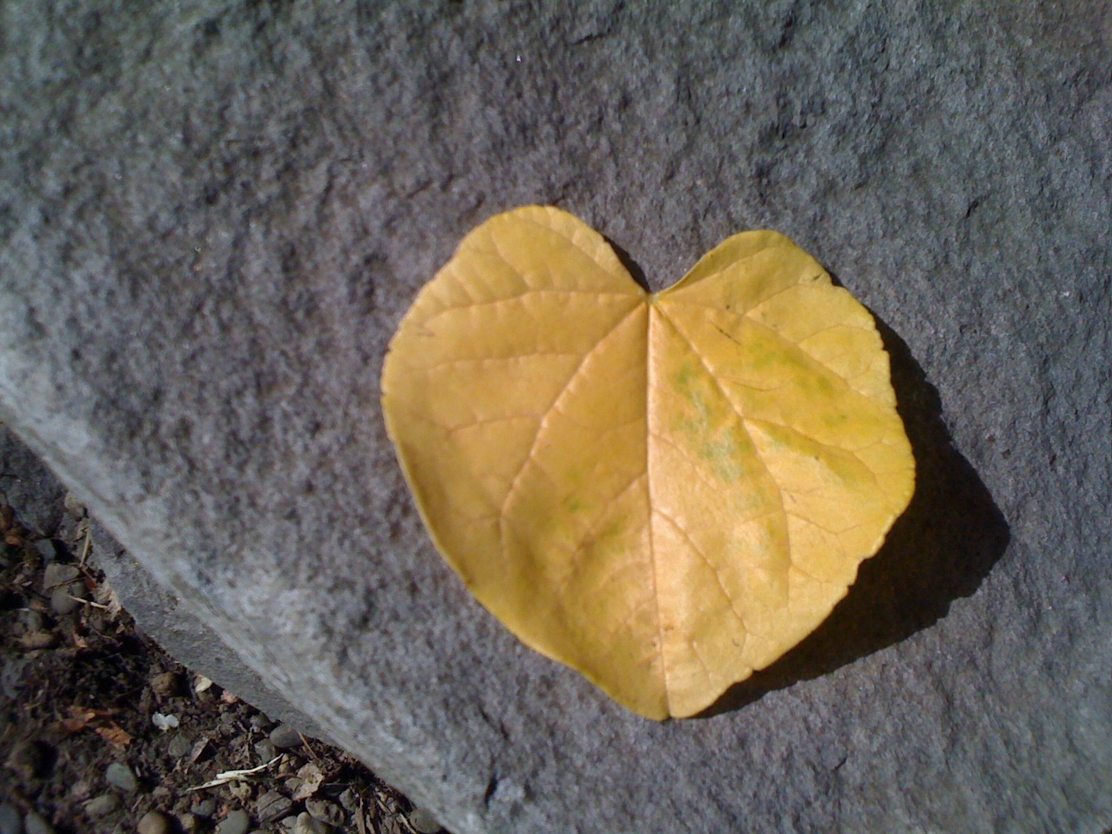 Fall Heart by Carrie Ure
