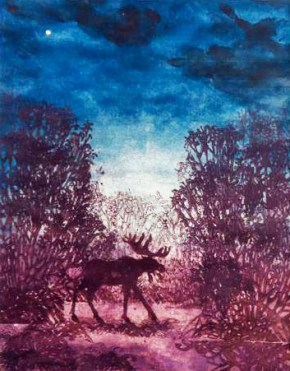 Moose and Evening Star in an Alder Carr