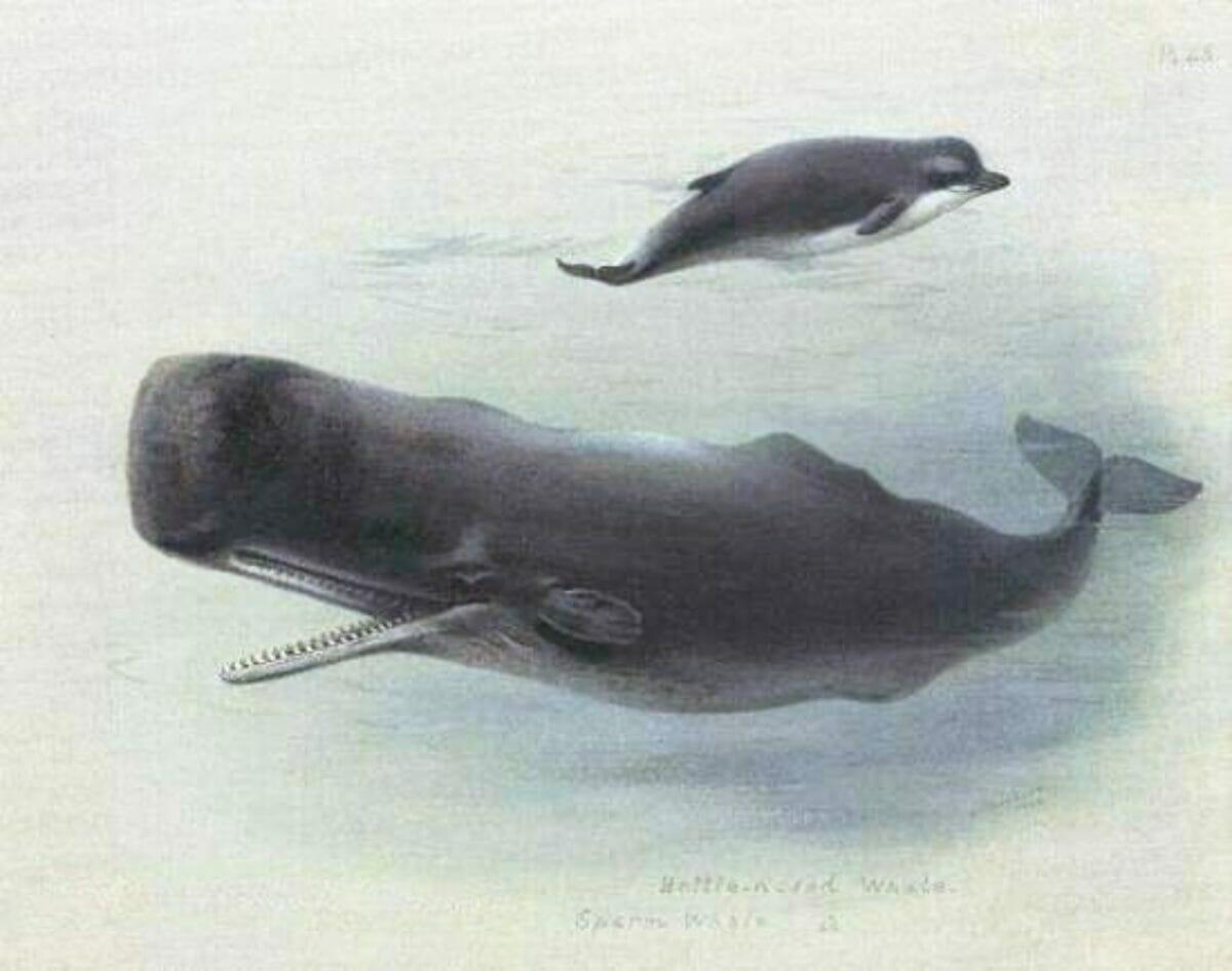 Whale Activities For Kindergarten