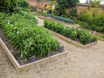 Painshill Park, Kitchen garden 4