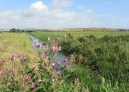 Aug 2012 Star Carr field Black dike drain
