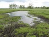 May 2009 Scrape on Grove Farm