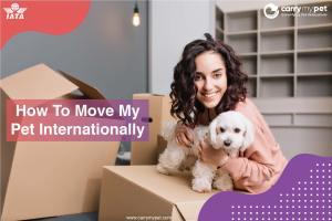 moving-pets-internationally