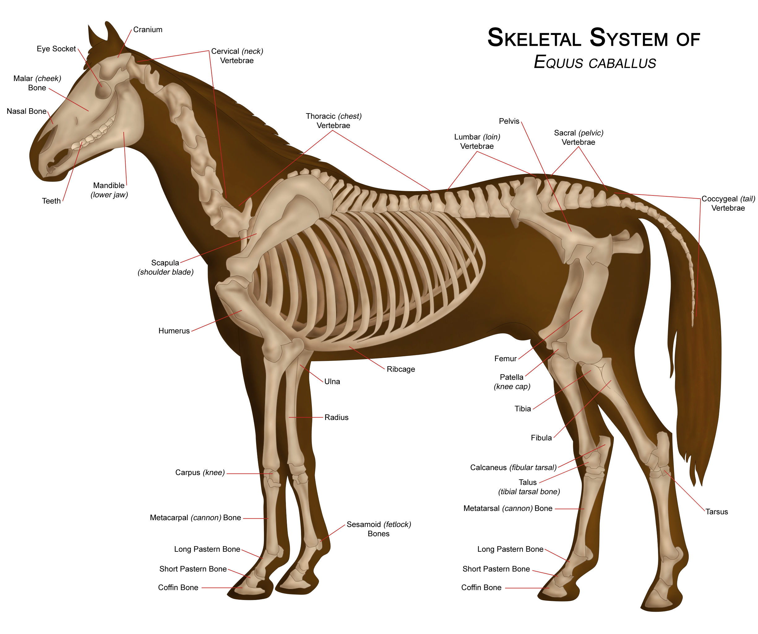 Equine Science I