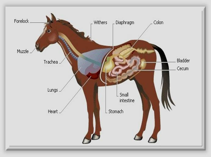 Equine Science I - Agricultural Education at Carson High ...