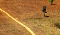 Ana_ Cotta CC - desmatamento