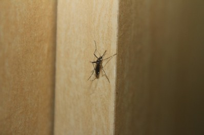 mosquito-347201_640