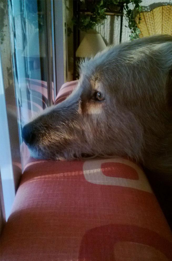 Lanzarote, que se parecía a su dueño, ya está en el cielo de los perros.
