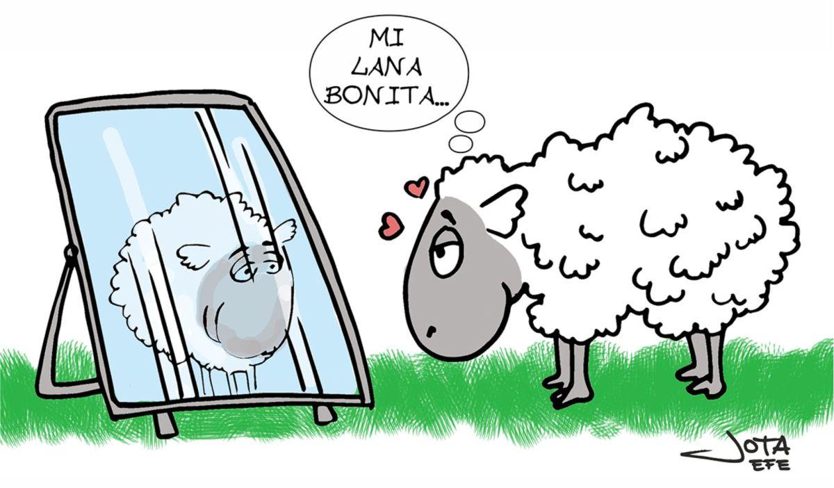mi_lana_bonita