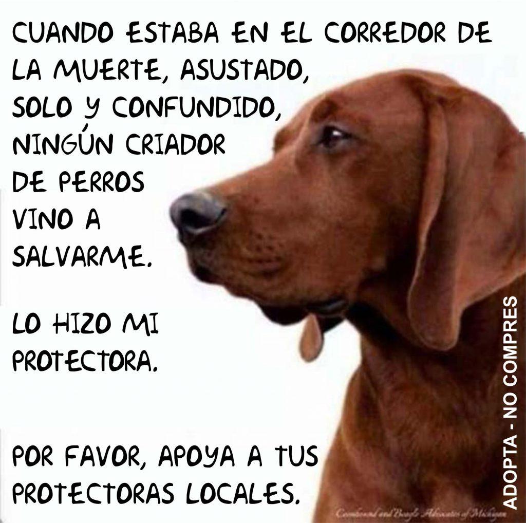 Apoya a las protectoras de animales locales.