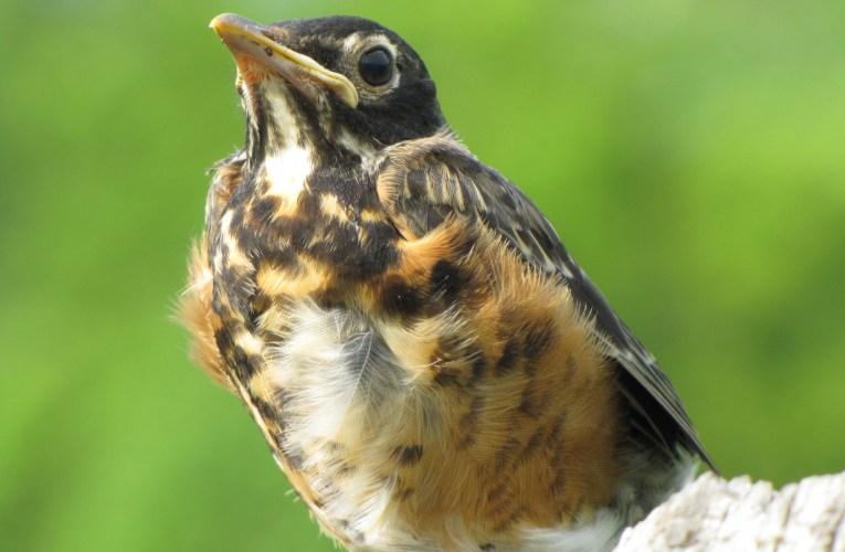 Extension Notes: Bird feeding