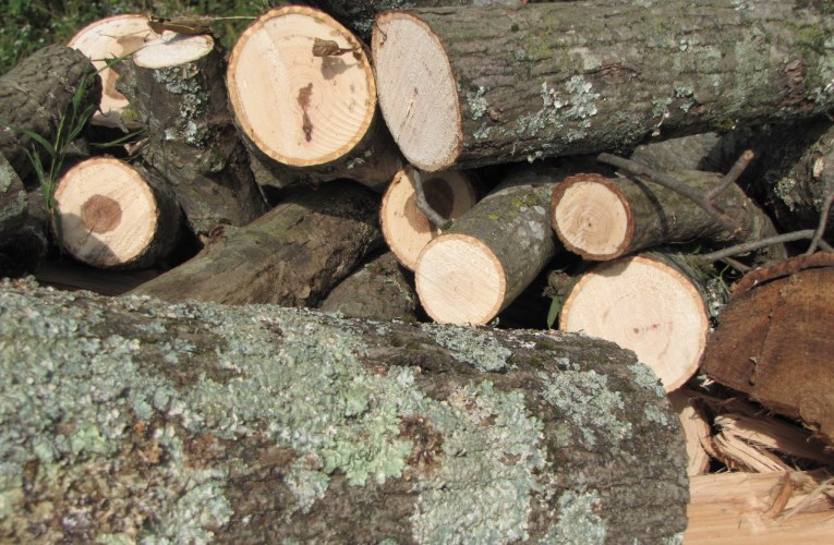 Extension Notes: Don't give firewood insects a winter home