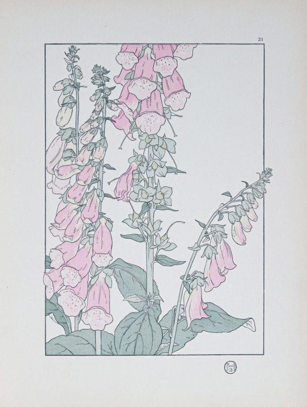 Gravure ancienne - Art Nouveau - Digitale Pourpre