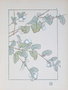 Gravure ancienne - Art Nouveau - Myrthe