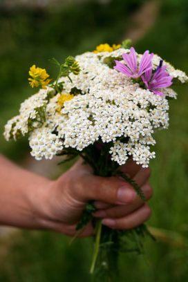 Buchet de flori de pe traseu