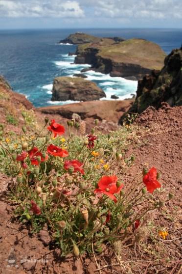 O pata de culoare - Peisaj superb si trasee sigure - Madeira - Peninsula Sao Laurenco