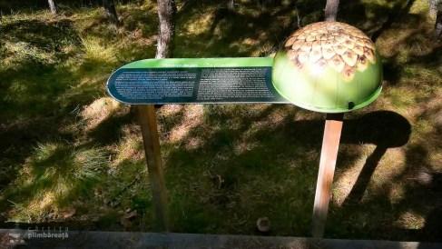 Parcul National Calimani - Tinovul Saru Dornei_1