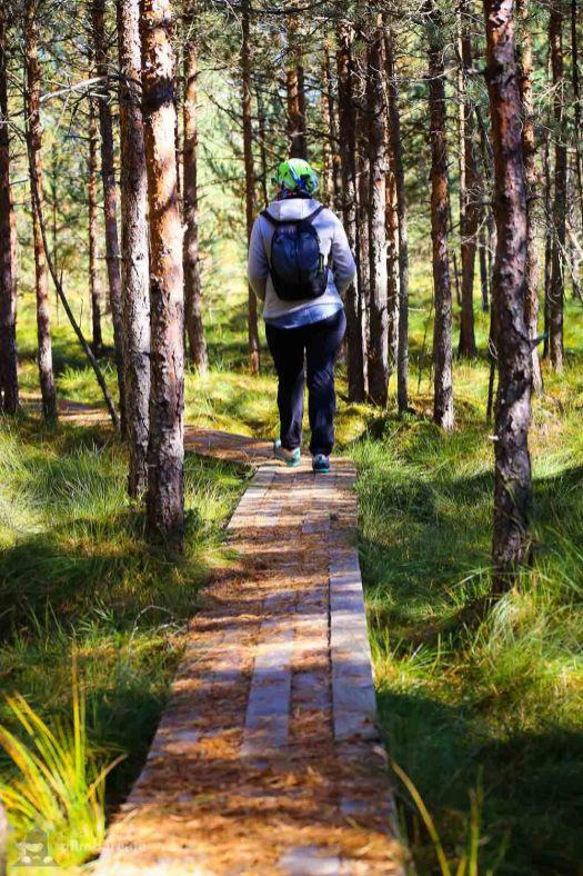 Parcul National Calimani - Tinovul Saru Dornei_13