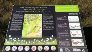 Parcul National Calimani - Tinovul Saru Dornei_3