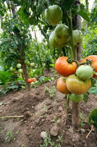Pensiunea Floare de Colt - Poiana Galdei (zona Intregalde)