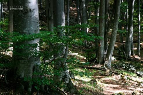 Poarta Zmeilor si Pestera Poarta Zmeilor - Culmea Bedeleului - Muntii Trascau_31