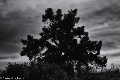 Shoreline Park, Mountain View, CA 2017
