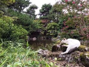 京都の円山公園で寝る猫