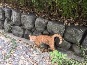 京都の円山公園にいる猫