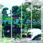 円山公園の猫