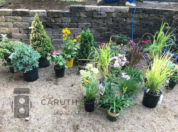 plants awaiting planting