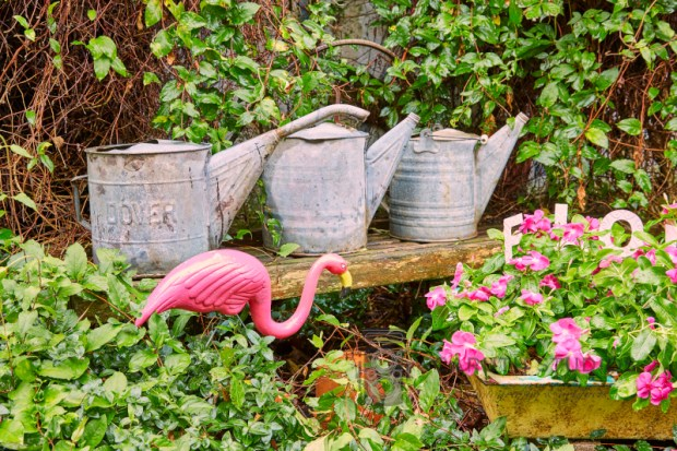 Flamingo and watering cans