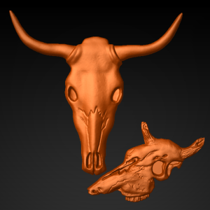 Steer_Skull_Collection_1