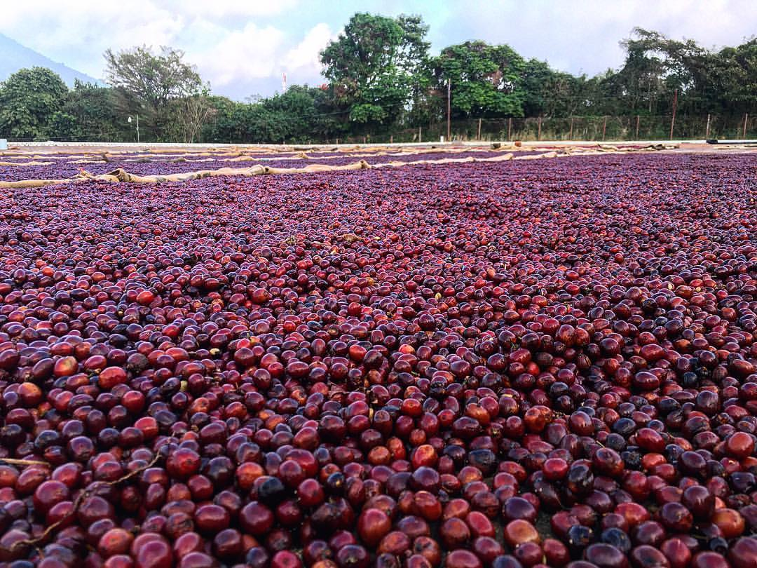 An insight into coffee farming via @carvetiicoffee