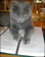 Meddling Cat II