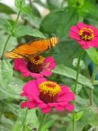 Mariposa in the garden