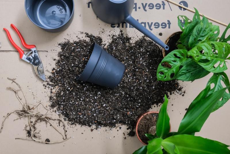 Como saber se está na hora de replantar sua planta unsplash 01 Vision Art NEWS