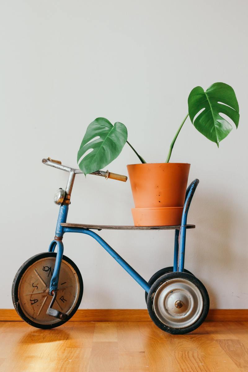 2 o guia completo para escolher o melhor vaso para suas plantas Vision Art NEWS
