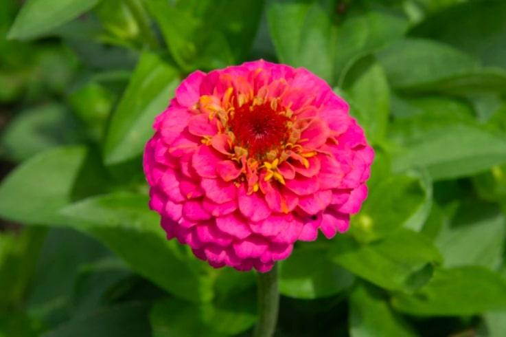 3 10 flores que vao trazer beija flores para seu jardim Vision Art NEWS