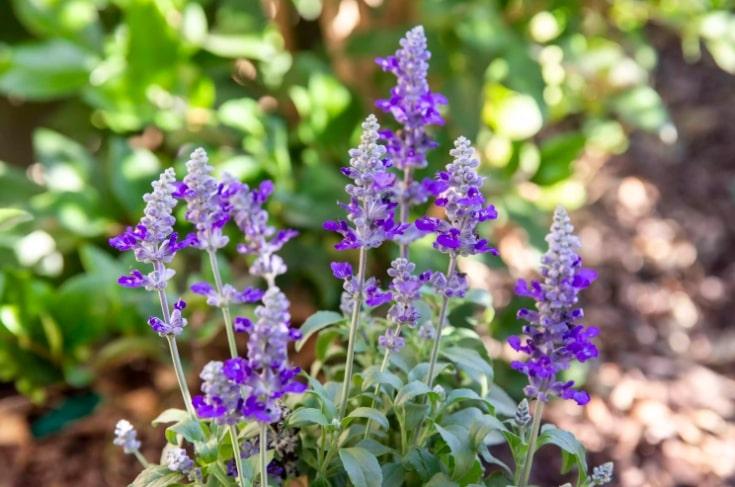4 10 flores que vao trazer beija flores para seu jardim Vision Art NEWS