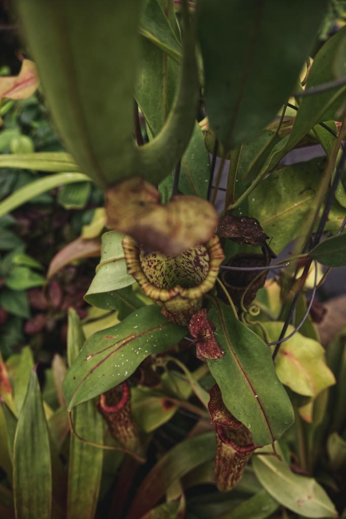 Como plantar e cuidar de plantas carnívoras 11 Vision Art NEWS